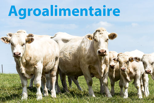 Photographe agroalimentaire